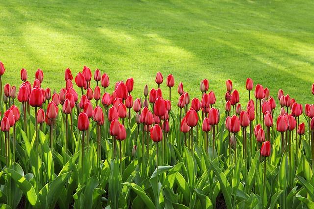 Piękny ogród dzięki fachowcom